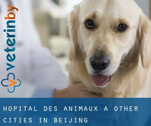 Hôpital des animaux à Other Cities in Beijing