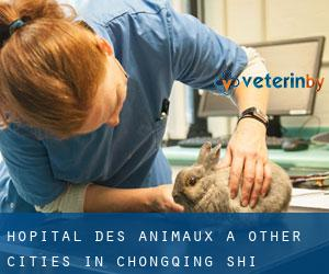 Hôpital des animaux à Other Cities in Chongqing Shi