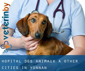 Hôpital des animaux à Other Cities in Yunnan