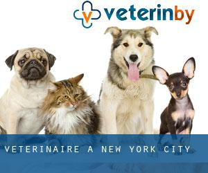 Vétérinaire à New York City
